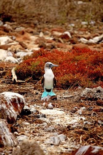 Galapagos rejser - Unikke oplevelser med Stjernegaard